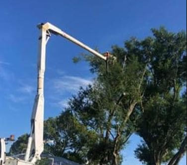 Tall tree being trimmed by tree service